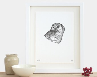 Hawk Owl Print - limited edition bird animal gift idea small A5 monochrome achromatic black and white illustrated