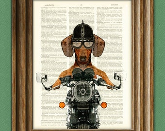 Dachshund Art Print Doxie Danger Motorcycle Stuntman dog illustration beautifully upcycled dictionary page book art print