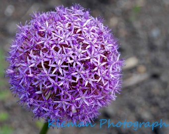 Purple Flower Magnet-ready to ship