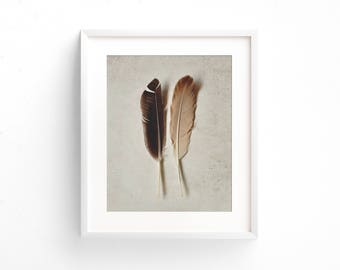 "feathers wall art, feather art prints, minimalist nature art, neutral wall art, nature photography prints, large art, art - ""Feathered Pair"""