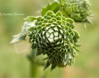 Geometrically Green I  (digital download)