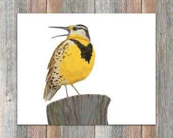 Eastern Meadowlark Bird Print