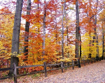 Autumn Photography 8x10 Cleveland Metroparks Ohio Nature Color Wall Art - Walk into Autumn