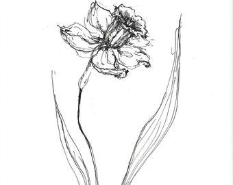 narcissus sketch, daffodil sketch, original sketch art, daffodil drawing, narcissus drawing, narcissus flower, narcissus plant, flower art
