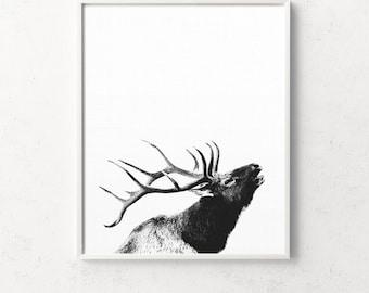Deer Head, Deer Print, Deer Antlers, Antlers, Deer Wall Art, Deer