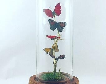 Small Centerpiece | Flutter by Katie | Butterfly Display | All Natural | Cloche Glass Domed Art | Red Gold Butterflies | Sculpture
