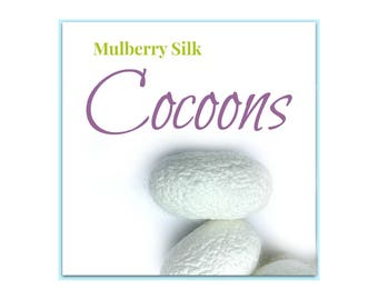 Mulberry Silk Cocoons. 10 pieces Bombyx Mori. Highest Quality. Uncut Cocoons. Including Larva.