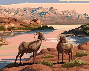 Lake Mead - National Recreation Area - Bighorn Sheep (Art Prints available in multiple sizes)