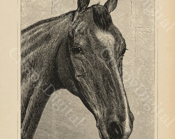 Horse Gift, Horse Lover, Horse Decor, Horse Art, Horse Print, Equestrian Art, Printable Wall Art, Vintage Horse Printable Digital Image