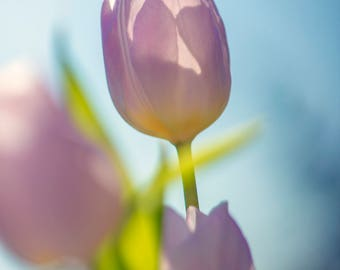 Tulip Photography, Personalized Print