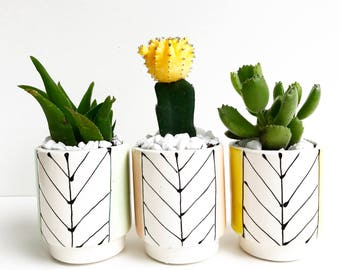 Handmade Ceramic Line Pot Planter with a POP of Color