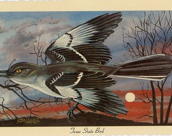 Texas State Bird - Mockingbird Vintage Postcard Signed Artist Ken Haag (unused)