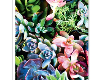 Succulent Dreams Greeting Card