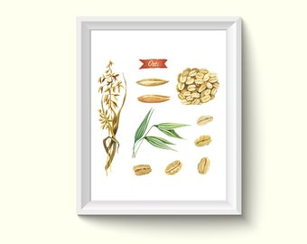 Oats Watercolour Painting Drawing Art Print N299