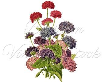 Botanical floral Vintage Print, Art poster Wall art home decor, plants antique books Digital art old vintage flowers Nature art, 2382