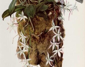 Botanical Flower Print White Orchid Artwork Cottage Decor Vintage Botanical Print White Home Decor Gift For Him Her 651