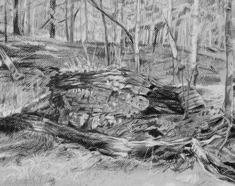 Forest Charcoal Drawing-  Original Fine Art - Grey- Woods, Trees- Realistic Landscape on Paper- 12x16- Horizontal