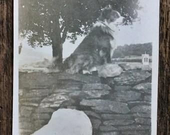 Original Vintage Photograph The Watchdog