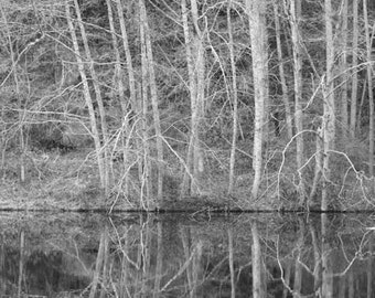 Tangled - Black and White Nature Photograph - Winter Trees Reflected in Water - 4x6, 5x7, 8x10, 11x14, 16x20