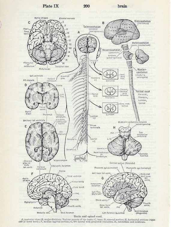 Menschliche Anatomie Gehirn und Rückenmark Vintage Medizin