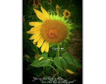 Sunflower Photography With Quote Black Framed Wall Art