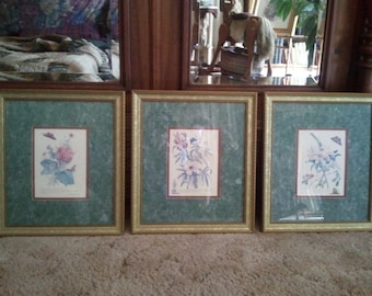 3 Botanical Flower Prints by George Ehret Framed and Matted...Free Shipping!