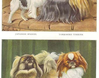 Vintage 1900s Pekingese Yorkshire Terrier and Japanese Spaniel by Louis Agassiz Fuertes