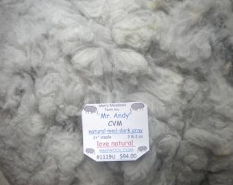 "mmfwool 1119U 3 lb 2 oz raw fleece ""Mr. Andy"" CVM 2+"" natural med-dark ray"