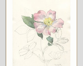 Rose drawing - ORIGINAL watercolor and pencil drawing of delicate rose - Nursery wall art - Floral art botanical drawing by Catalina