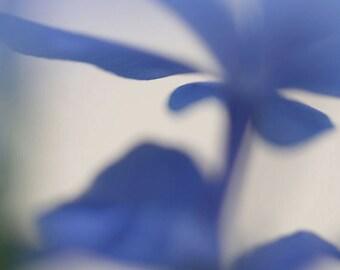 """Abstract photograph, blue flower photo, wall art, home decor -- """"Blue Haze 1"""", a 5x5-inch fine art photograph"""