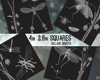 Black and White Bugs Vintage 3.8 Inch and 4 x 4 Square Digital Collage Sheet Printable Download Scrapbooking Cards Magnet Coasters Gift Tags