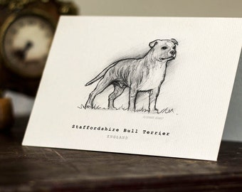 Staffordshire Bull Terrier Greeting Card -  Beautifully drawn luxury handmade on heavy textured card. FREE P&P for UK card orders.