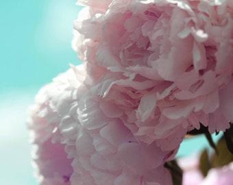 Photo Print - Pink Peonies on Turquoise Sky