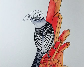 The Zebra Finch