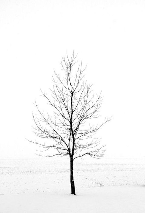 Items similar to Winter Landscape Photography, Nature