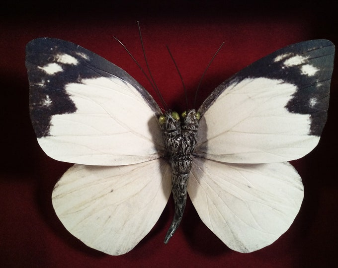 Two headed Butterfly  Specimen Faux Taxidermy