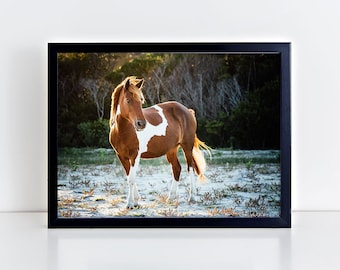 Horse Print, Horse Photography, Gift for Horse Lover, Horse Wall Art, Equine Print, Assateague Island, Wild Horse, Equestrian Decor