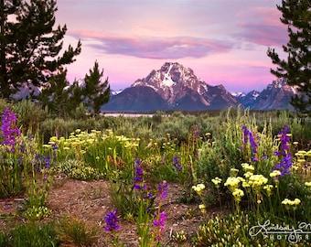 "Mountain Wall Art   ""Grand Teton Sunrise   Grand Teton National Park Photo - Mt Moran Photo - Mountain Flowers - Purple Mountain Wall Art"