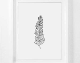 Feather Drawing, Feather Sketch, Framed Drawing, Framed Sketch Art, Bohemian Framed Artwork, Feather Illustration, Feather Wall Prints