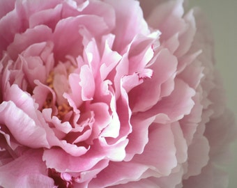 Peony Photo Poster, Pink and Grey