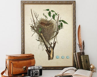 Vintage Botanical Print Bird Nest Eggs Giclee Antique Natural History Art Decorative Audubon Bird's Nest Egg Reproduction B007