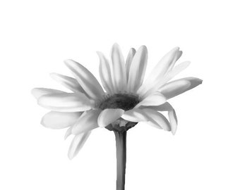 Daisy Flower Canvas Print, B&W Art