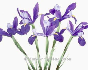 Iris Print, Irises Print, Iris Giclee Print, Flower Print, Floral Print, Giclee Print, Fine Art Print