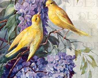 GORGEOUS Golden Yellow BIRDS In Wisteria. Vintage Bird Illustration.  Digital Bird DOWNLOAD. Printable Bird Image.