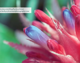 Bromeliad Macro Fine Art Photo Print