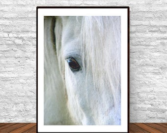 Horse Photo, Black and White Art, Contemporary Wall Art, Horse Poster, White Horse Print, Equestrian Art, Printable Art, Horse Wall Art