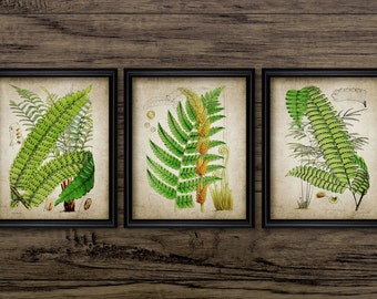 Fern Print Set of 3 - Vintage Fern Plant Botanical Art - Fern Wall Art Print - Printable Art - Set Of Three Prints #178 - INSTANT DOWNLOAD