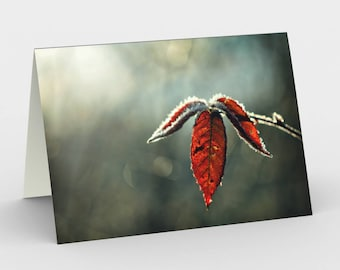 Autumn Leaf Card, Blank Note cards, Nature Note Cards, Greeting Cards, Three Note Cards, 5x7 Cards, Nature Blank Card, All Occasion Cards