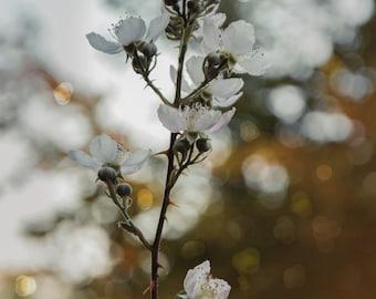 Fine Art print Flower photography Autumn