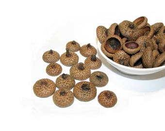 Natural acorn caps // acorn tops // oak acorn caps //Natural wood supplies, rustic decorations, felt acorns diy, ecofriendly decorations
